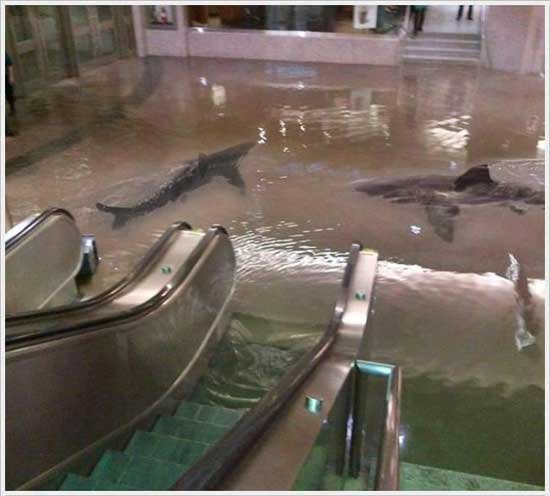 Sharks in a Flooded Shopping Mall? No