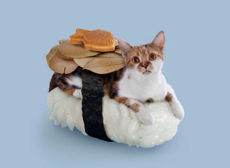 fish sushi cat