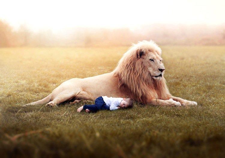gabe-lion