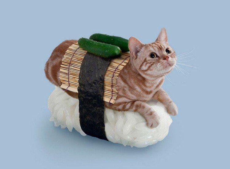gherkin sushi cat