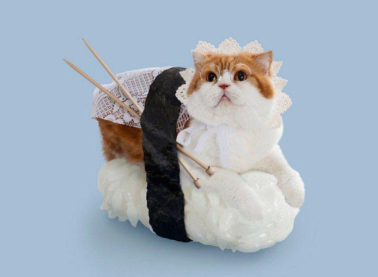 granny sushi cat