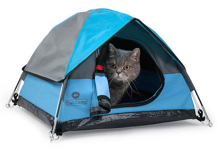 gray cat cat camp