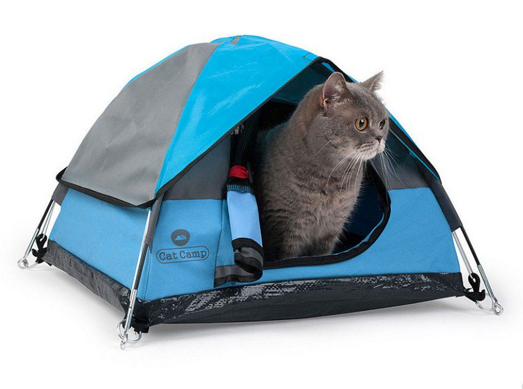 gray cat tent