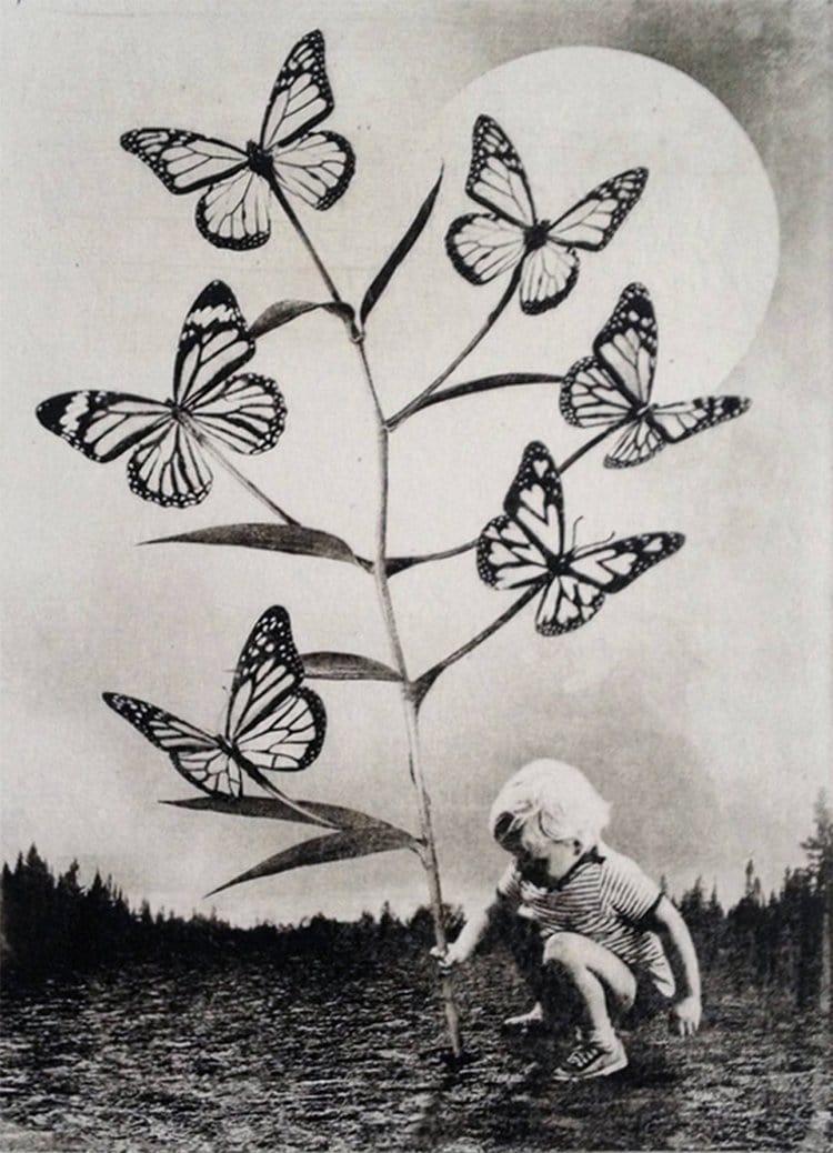 jaco-putker-butterflies