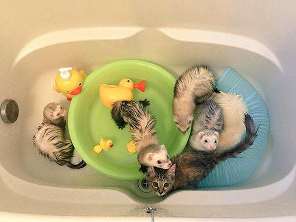 kitten-bath