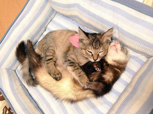 kitten-fer
