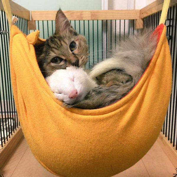 kitten-hammock