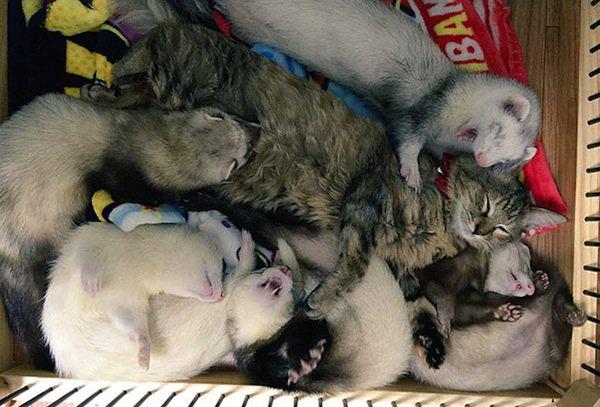 kitten-sleeping