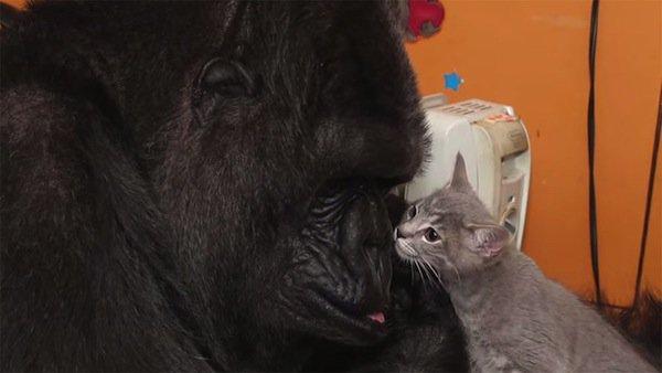 koko-kittens