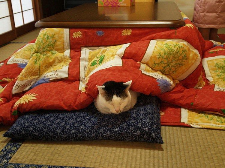 kotatsu-hamma