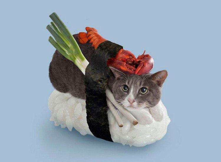 lobster sushi cat