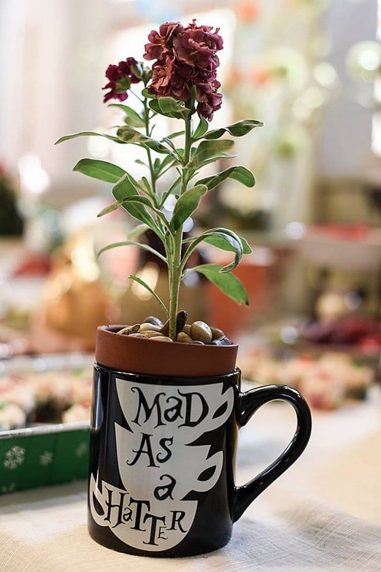 mad hatter plant
