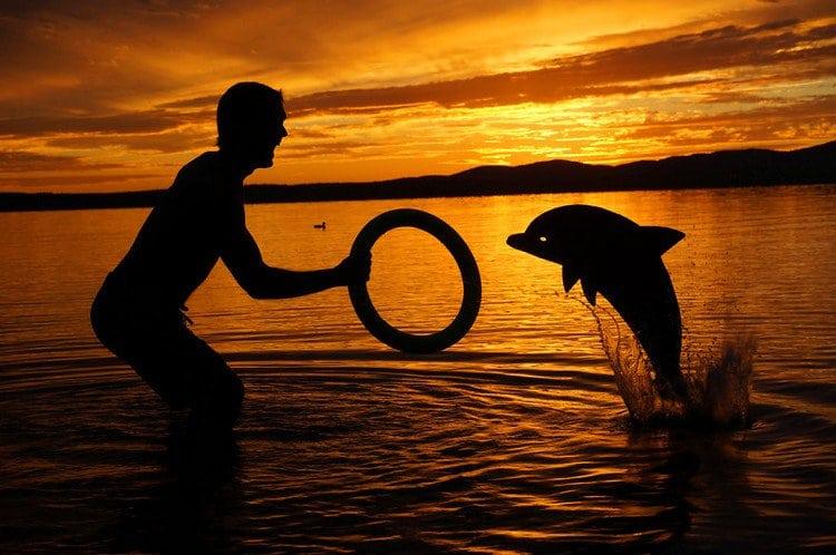 man dolphin hoop silhouette