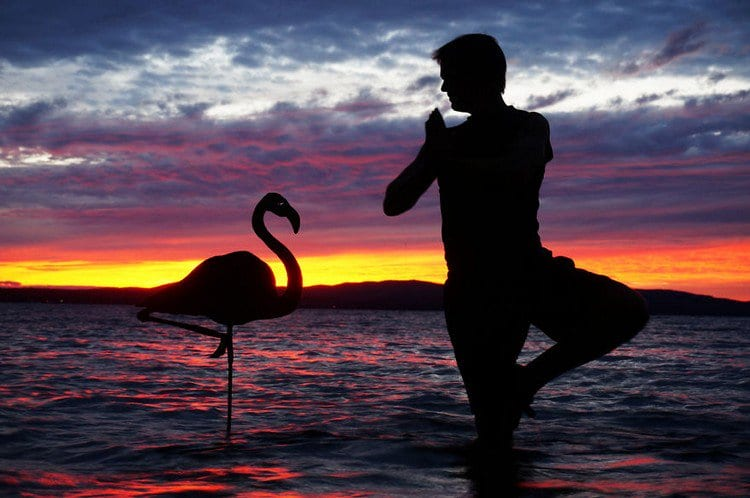 man flamingo silhouette