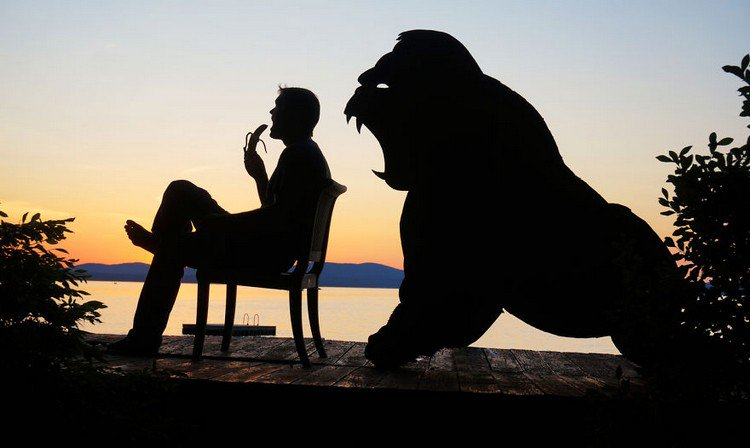 man gorilla silhouette