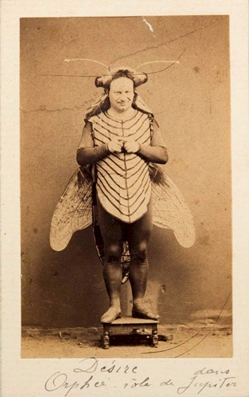man insect costume