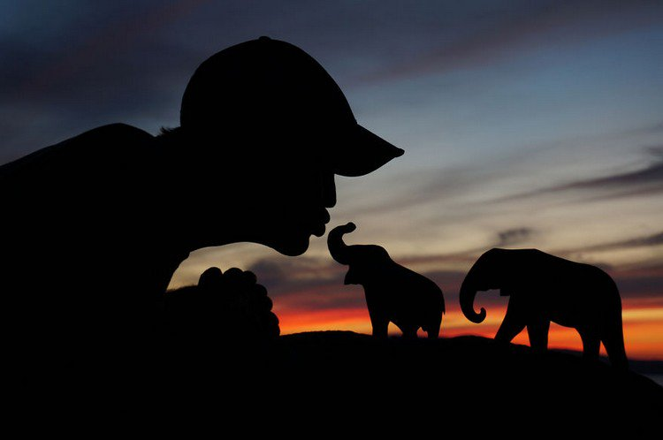 man kissing silhouette elephants
