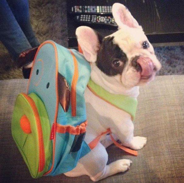 manny backpack
