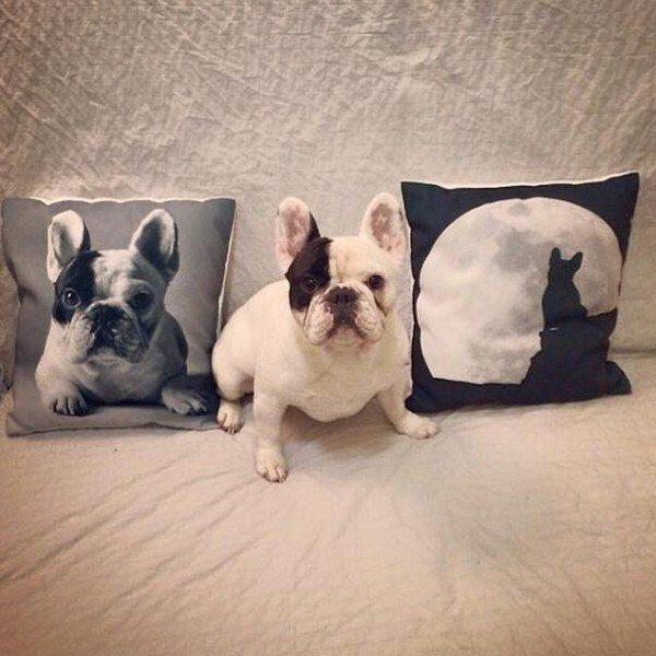 manny cushions