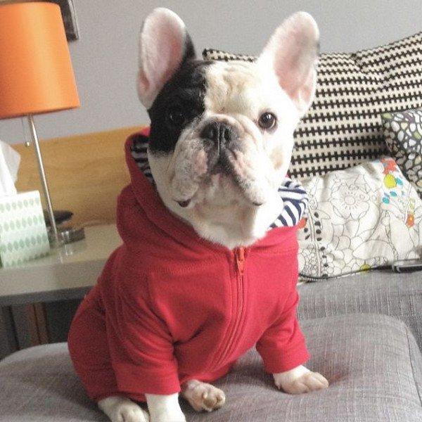 manny red sweatshirt