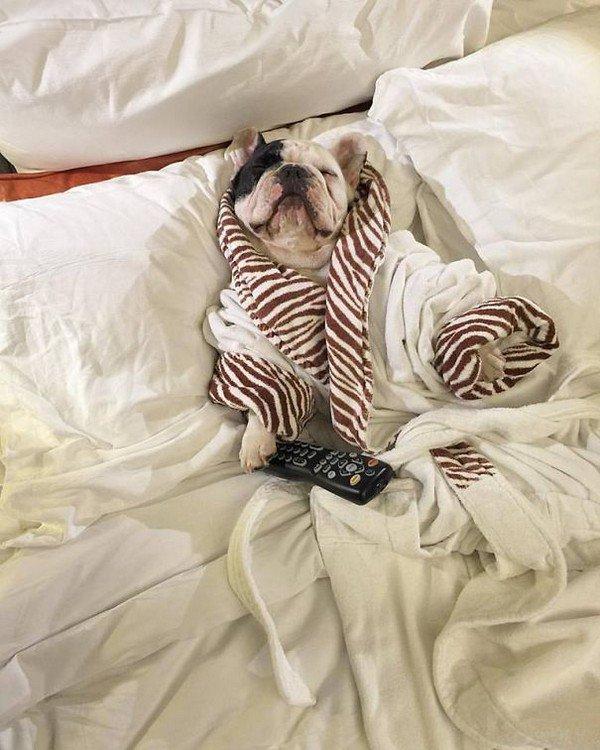 manny robe remote