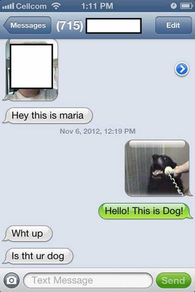maria dog text