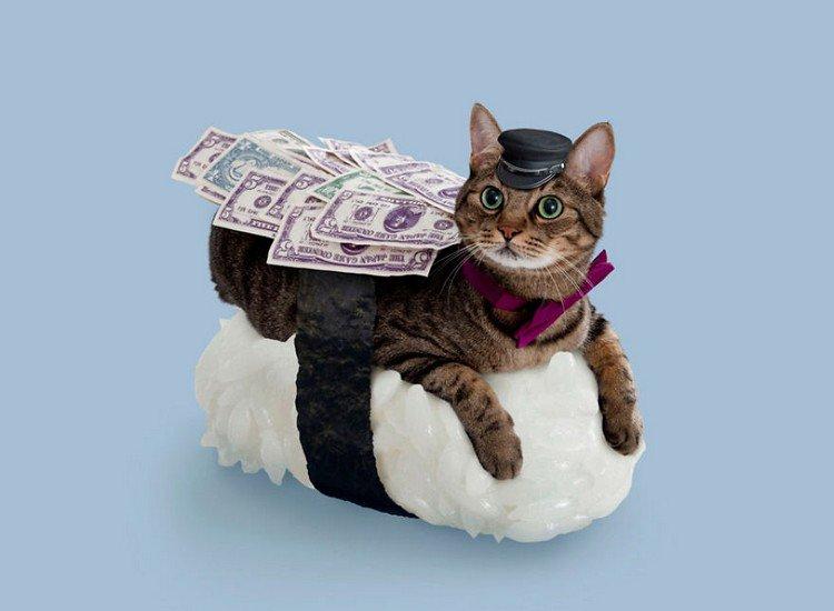 money sushi cat