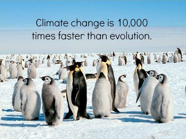 penguins climate change