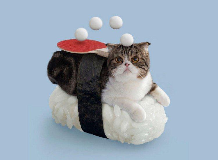 ping pong sushi cat