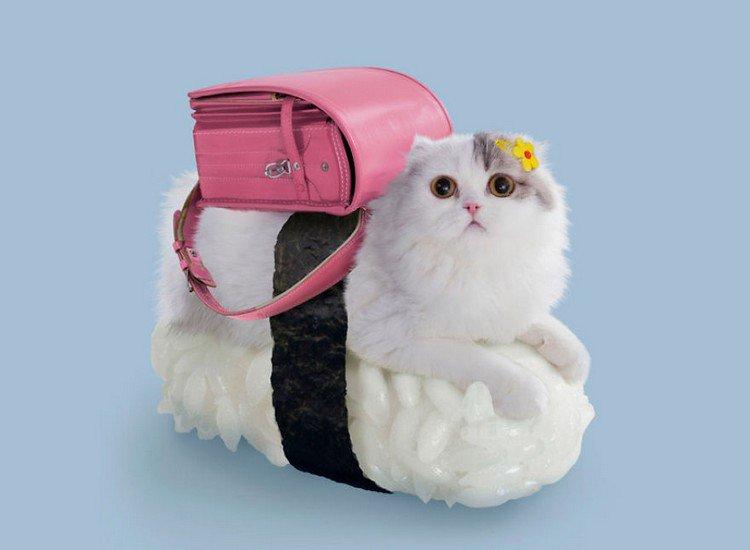 pink bag sushi cat