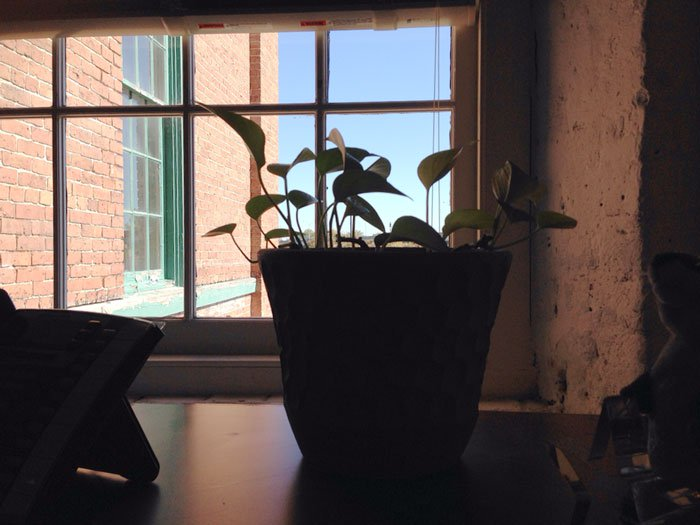 plant ledge