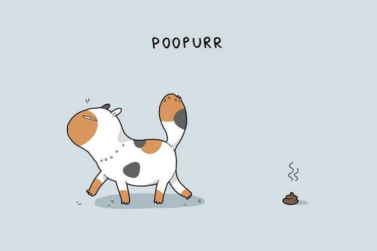 poopurr cat