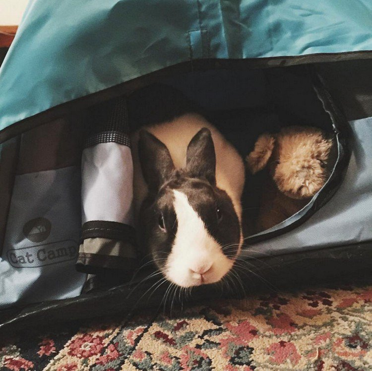 rabbit cat tent