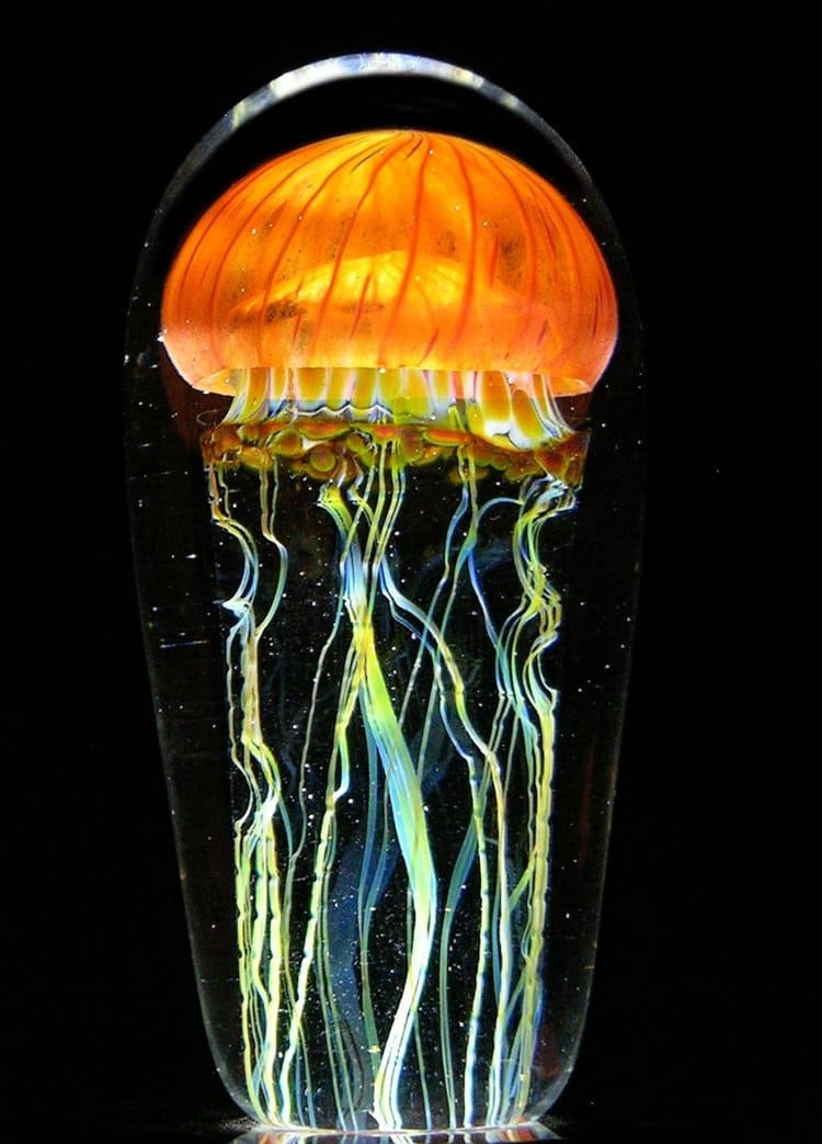 rick-satava-jellyfish-orange