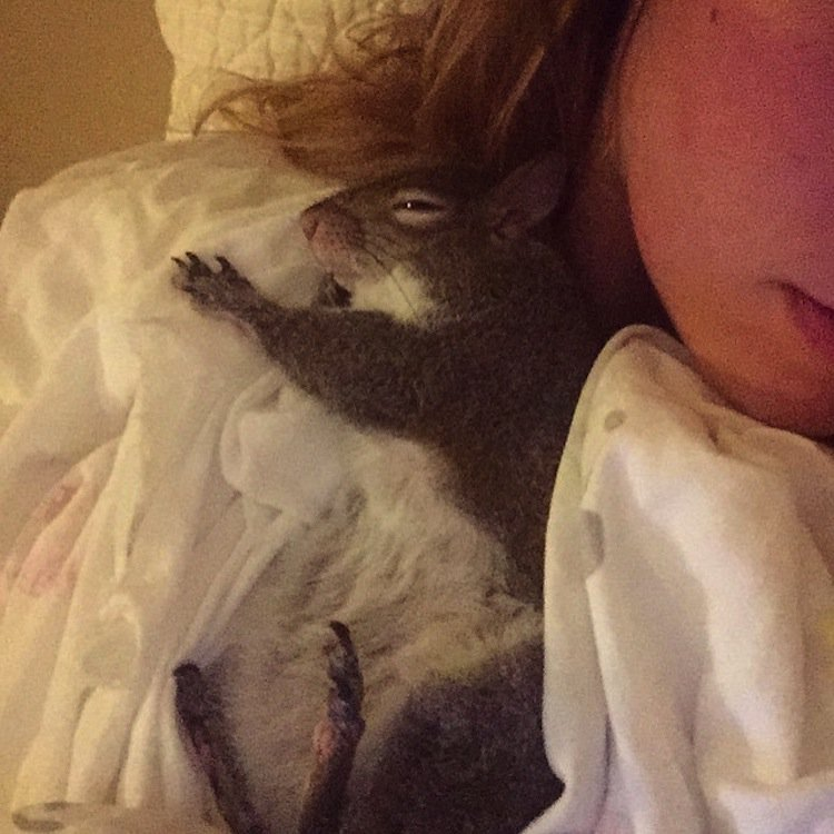 squirrel-cuddle