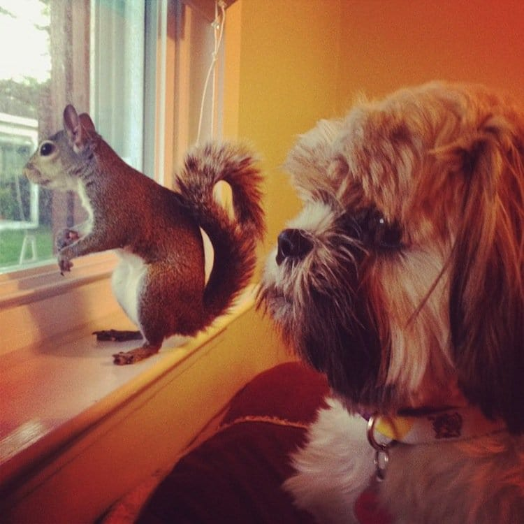 squirrel-dog