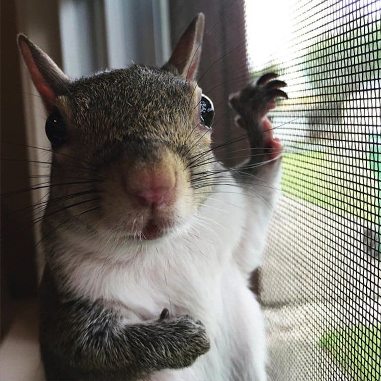 squirrel-net