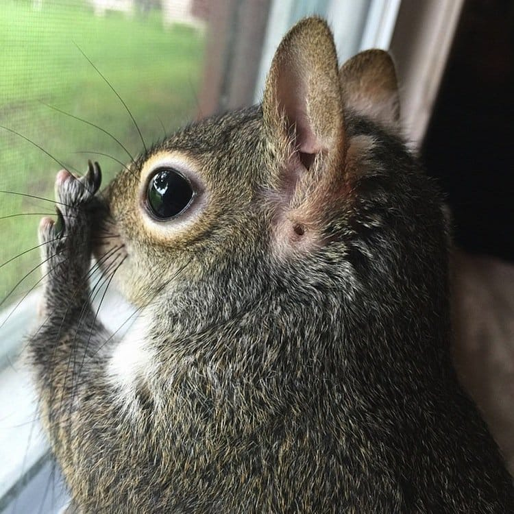 squirrel-window