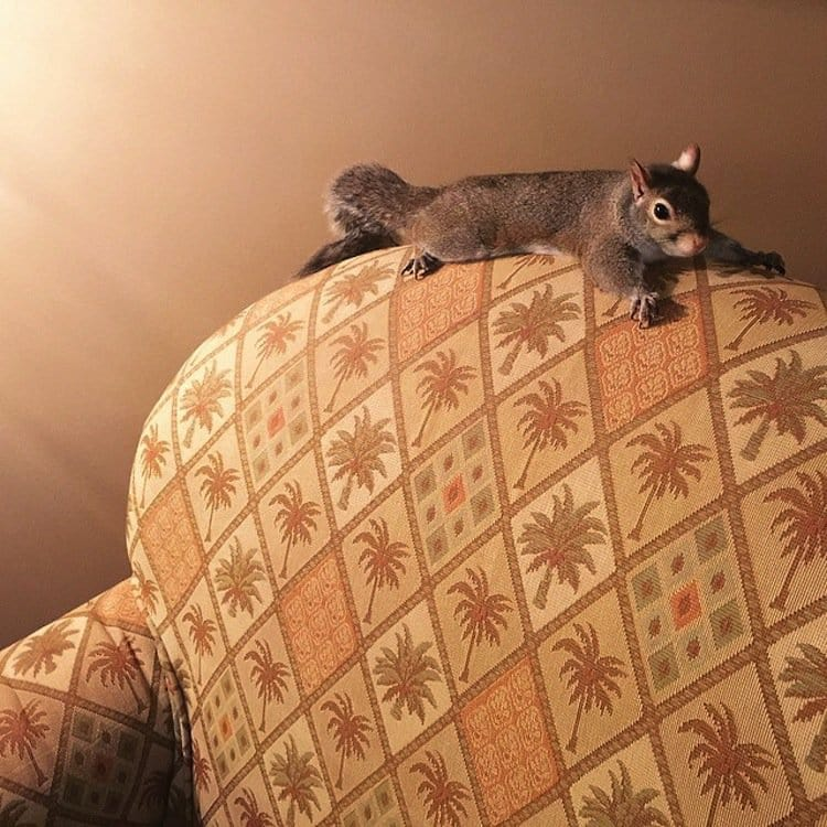 squirrel=couch