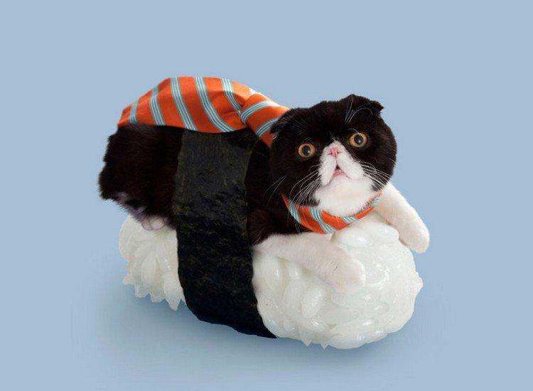 tie sushi cat