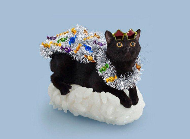 tinsel sushi cat