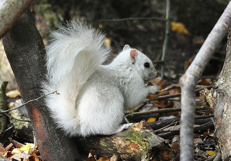 white-squirrel-two
