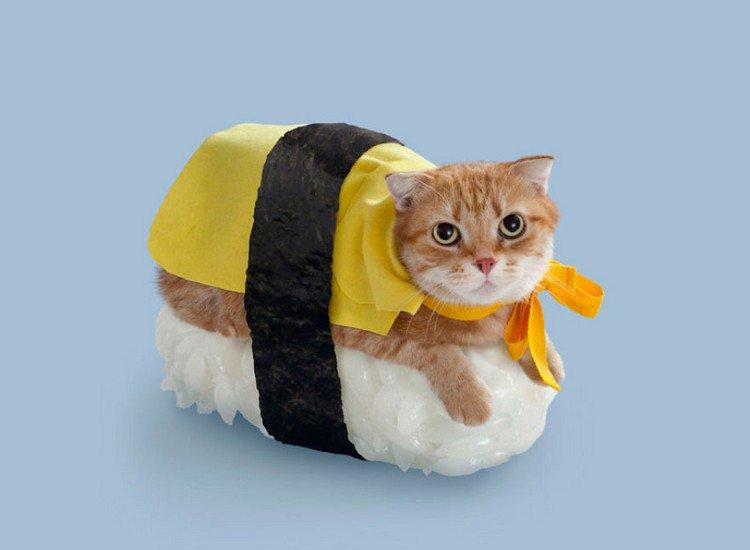 yellow sushi cat