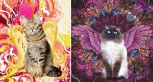 2016 'Celestial Whiskers' Cat Calendar