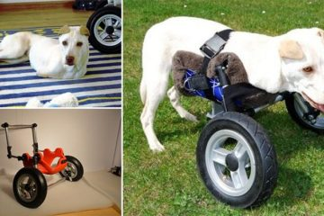 3D Printed Wheelchair Immobile Dogs