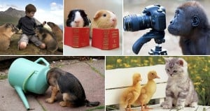 Adorable Curious Animals