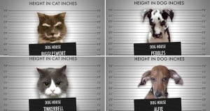 Animal Mugshots Convicts