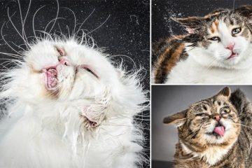 Carli Davidson Shake Cats