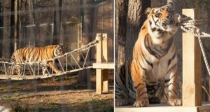 CatastrophiCreations Indiana Jones Tiger Bridge