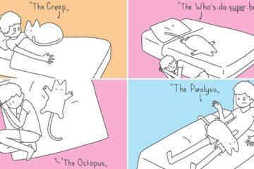 Cats Dominate Sleeping Arrangements